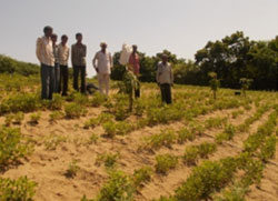 Other farmers visiting Vittalbhai's plantation to replicate in their farms