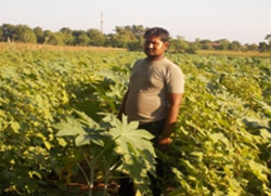 Vaghbhai stands proudly in his intercropped Caster cotton field expecting greater financial returns